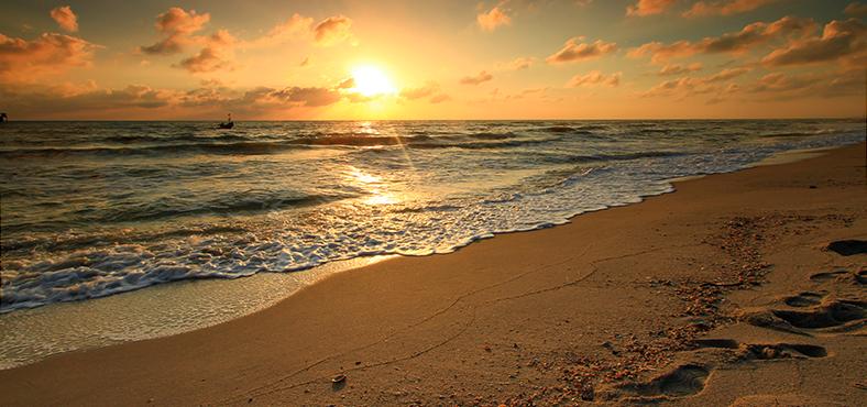 viaja a distintos ambientes, playa, bosque, nuevas culturas
