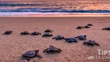 Vive la maravillosa liberación de tortugas en Crown Paradise